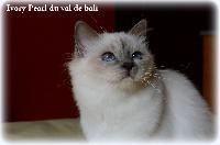 CH. Ivory pearl du Val de Bali