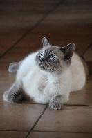 Mirabelle Cat's Cradle
