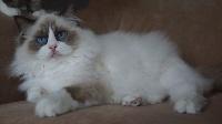 Apollo castillo cat