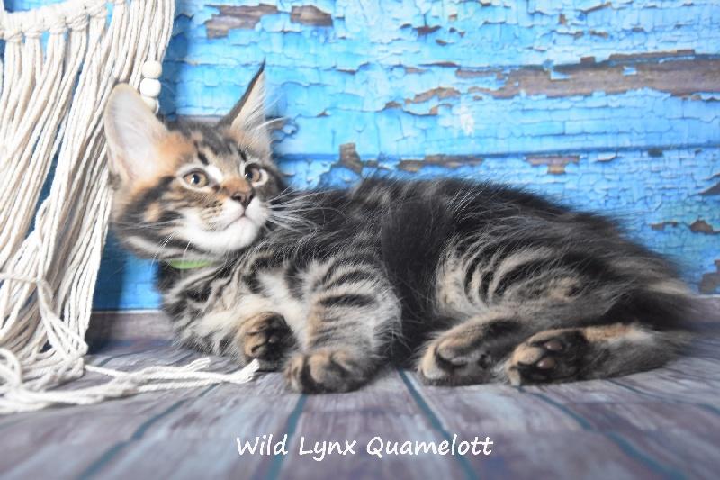 Quamelott -