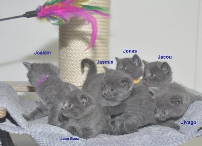 des Bleus de Houna - Edelweiss 6 chatons