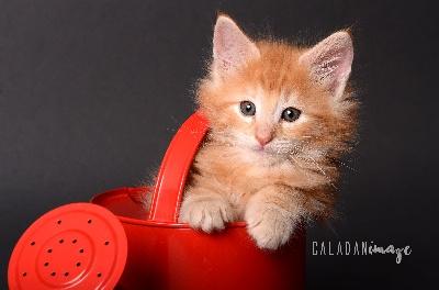 De Caladan - Des chatons !