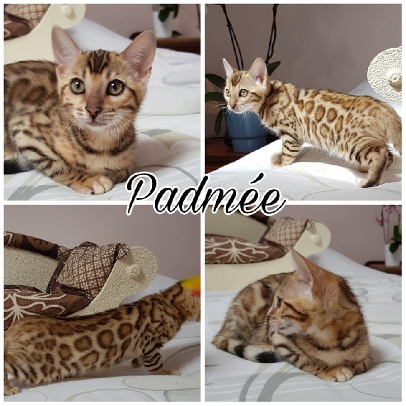 PADMEE -