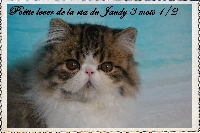 La Ria Du Jaudy - Chaton disponible  - Persan