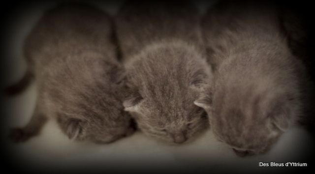 Des Bleus D'yttrium - Naissances de 4 beaux bébés ce 28/01/2021