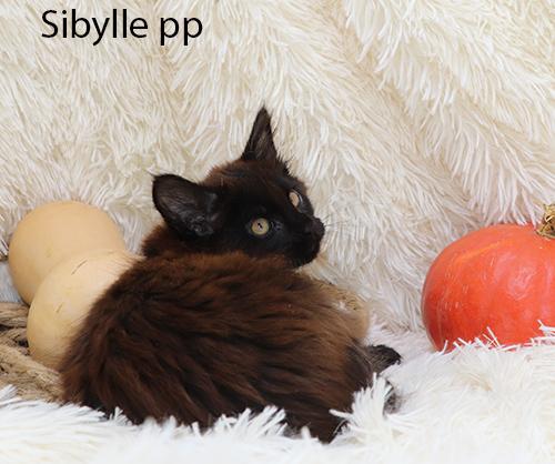 Sybille pp
