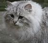 Catplay - Zeph' nous a rejoint