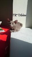 GIC (FIFé )Janedig bihan Diblev