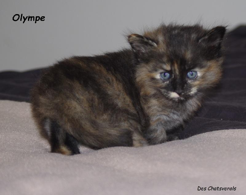 OLYMPE -
