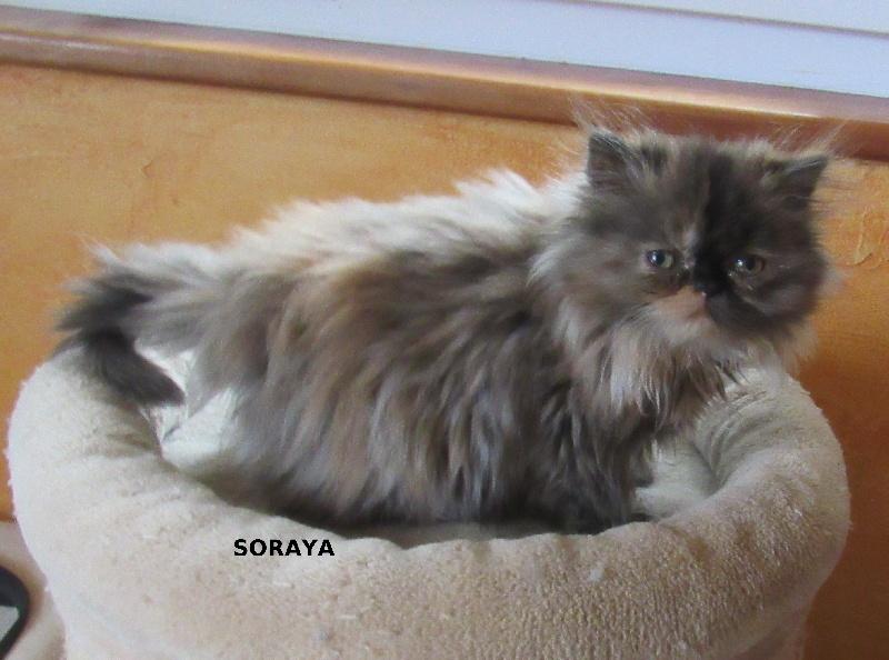 Soraya -