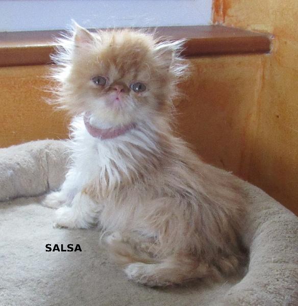 Salsa -