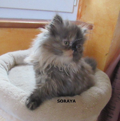 Soraya - Persan