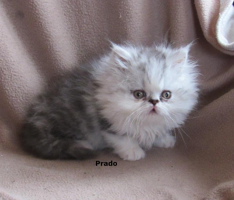 Prado -