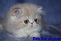 OLIVER - Persan