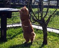 CH. bobby tail's Virtuoz