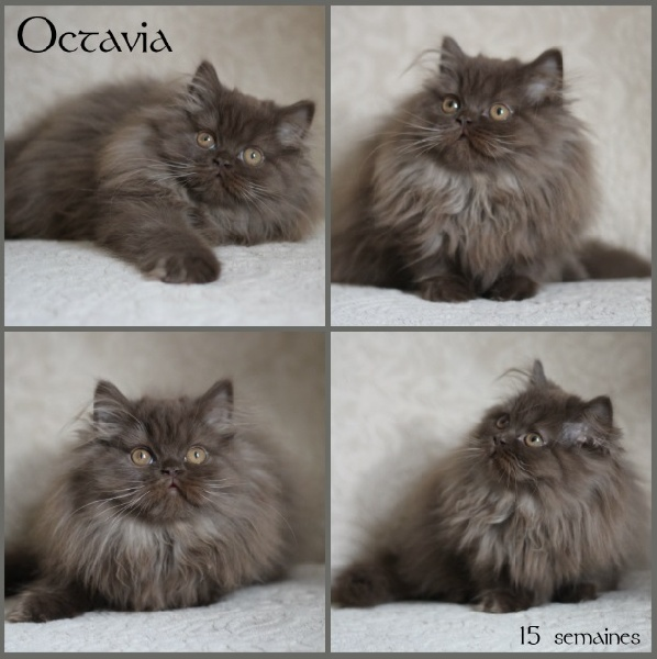 Octavia du Monde de Gaïa
