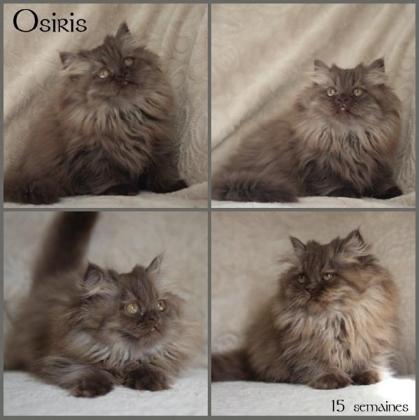 Osiris du Monde de Gaïa