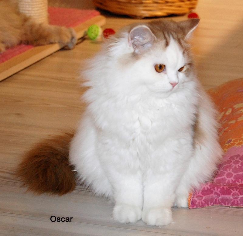 Oscar de La Cour du Roi -