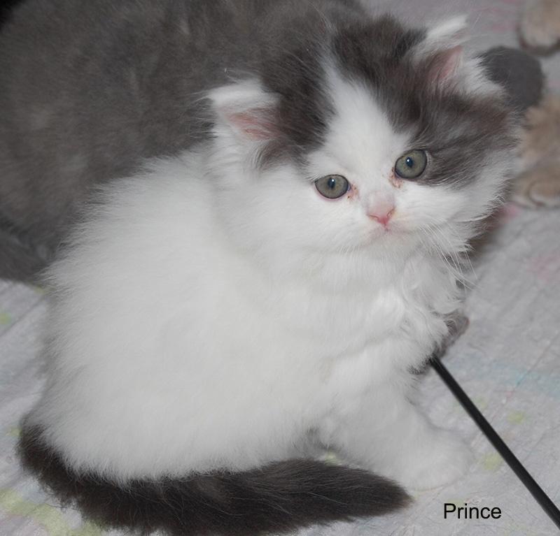 Prince de La Cour du Roi -