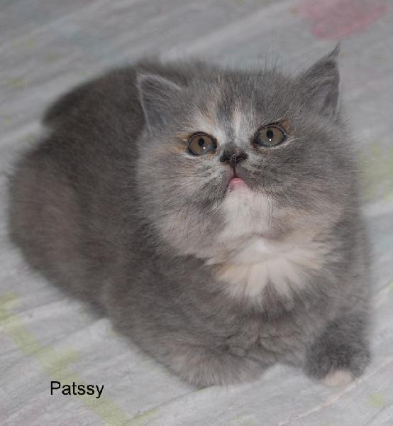 Patssy de La Cour du Roi -