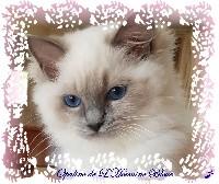 CH. Opaline De L'Hermine Bleue