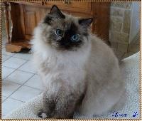 Linette De L'Hermine Bleue