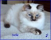 CH. Izelle De L'Hermine Bleue