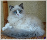 maurice Beatrix