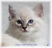 Prosper de L'Hermine Bleue