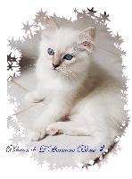 Phlocon de L'Hermine Bleue