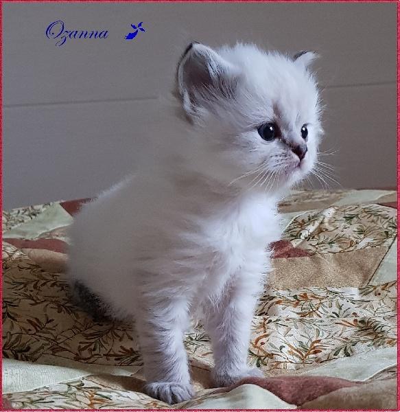 Ozanna