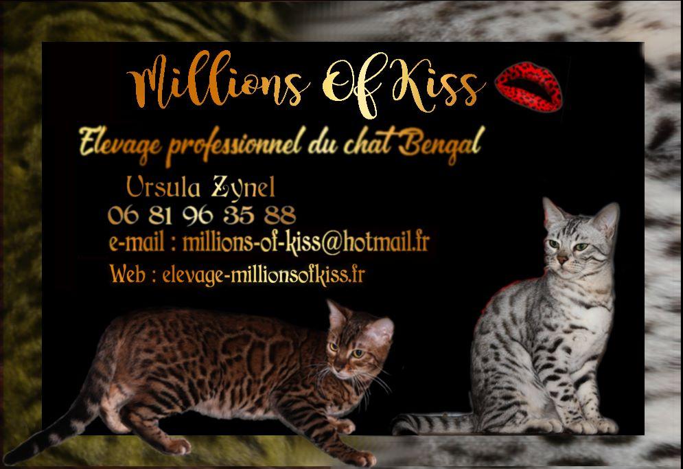 Elevage Millions Of Kiss , eleveur de chats Bengal