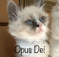 Opus Dei - Sibérien