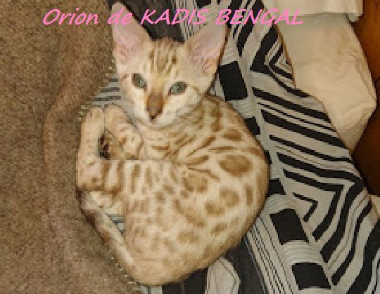 ORION -