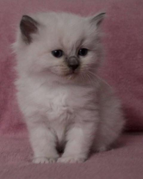 Pearlie -