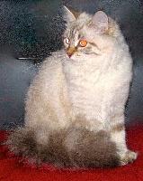 CH. Iolanta Iz Kolybel'nykh