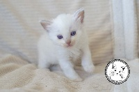 ociane lilac mitted