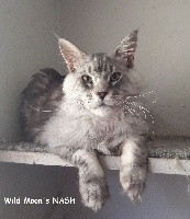 Wild Moon's Nash