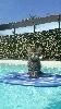 De La Griffe Siberian - Avec la canicule hier Nadal c'est initié au Surf