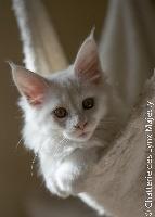 CH. Just by love Des Lynx Majesty