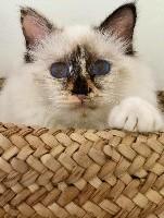 blessing blue eyes Angel