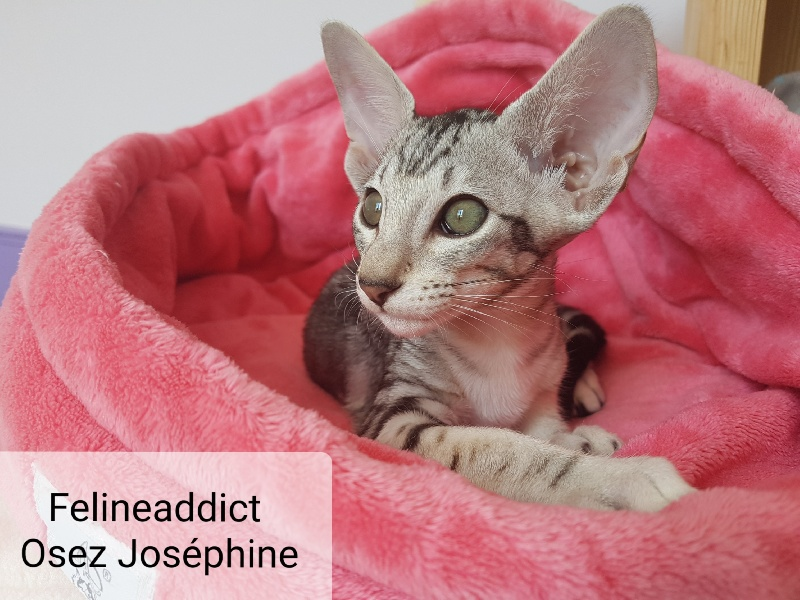 Felineaddict Osez Joséphine