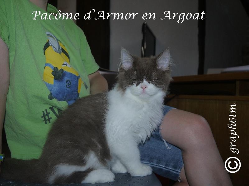 PACOME D'ARMOR EN ARGOAT -