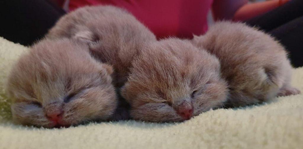Des Ours De Pandora - Ils sont nés.....