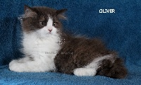Oliver de L'Héden du Quercy - Highland Straight