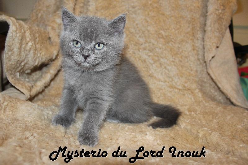 Mysterio du Lord Inouk