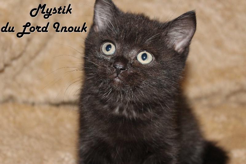 Mystik du Lord Inouk