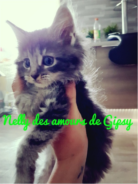 Nelly des amours de gipsy