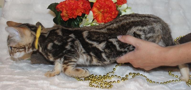 CHATON femelle collier jaune