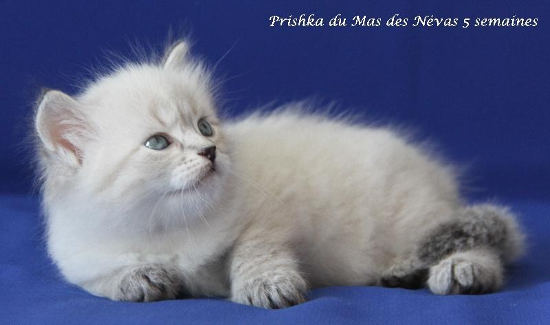 Prishka